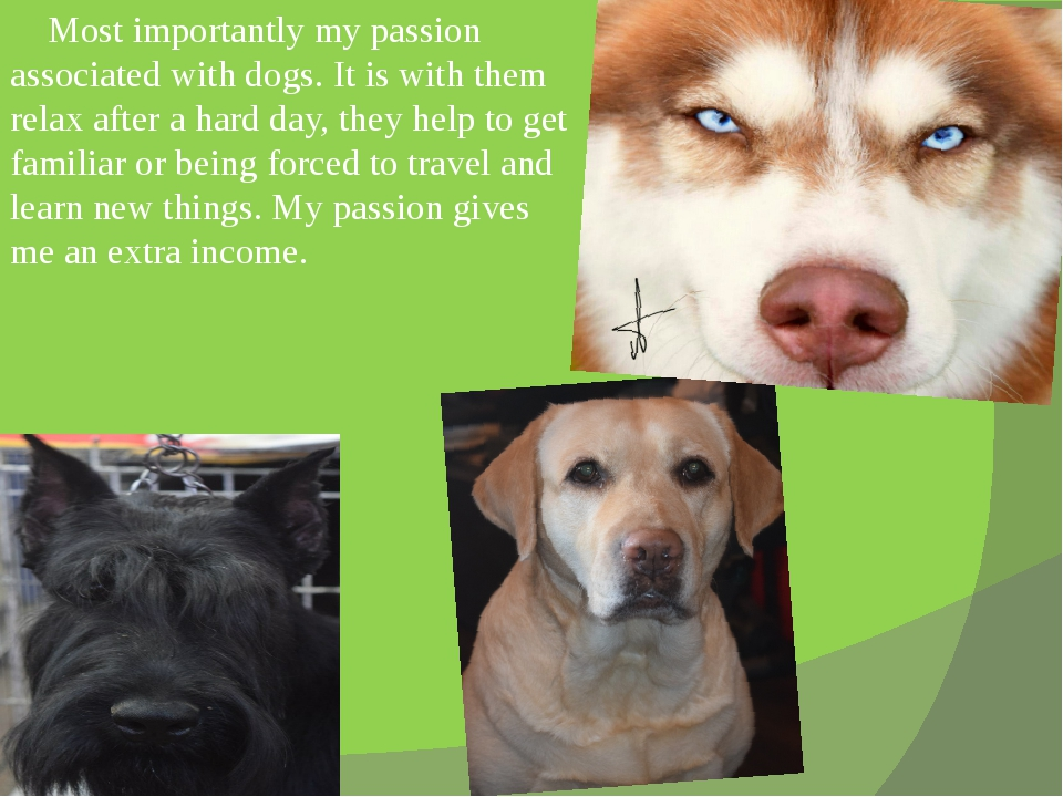 Most importantly my passion associated with dogs. It is with them relax afte...