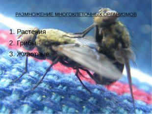 РАЗМНОЖЕНИЕ МНОГОКЛЕТОЧНЫХ ОРГАНИЗМОВ 1. Растения 2. Грибы 3. Животные