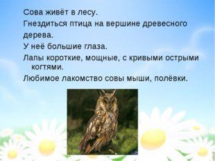 Сова живёт в лесу. Гнездиться птица на вершине древесного дерева. У неё больш