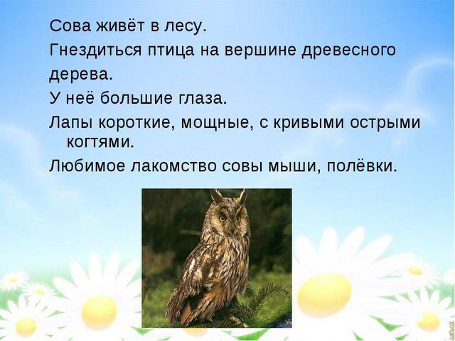 Сова живёт в лесу. Гнездиться птица на вершине древесного дерева. У неё больш...