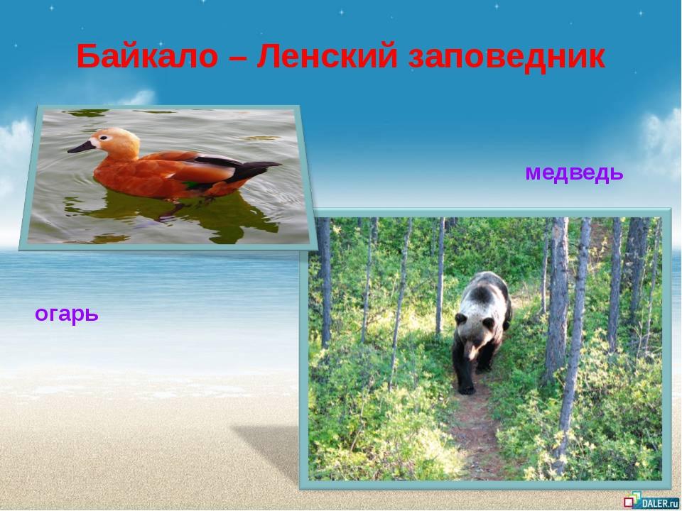 Байкало – Ленский заповедник огарь медведь
