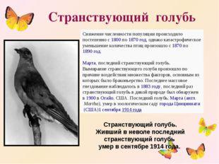 Странствующий голубь Снижение численности популяции происходило постепенно с