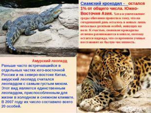 Амурский леопард Сиамский крокодил - остался 1% от общего числа. Южно-Восточн