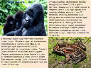 Горная горилла В настоящее время существует две популяции горных горилл. Пер