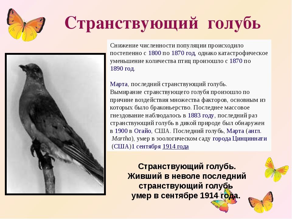 Странствующий голубь Снижение численности популяции происходило постепенно с...