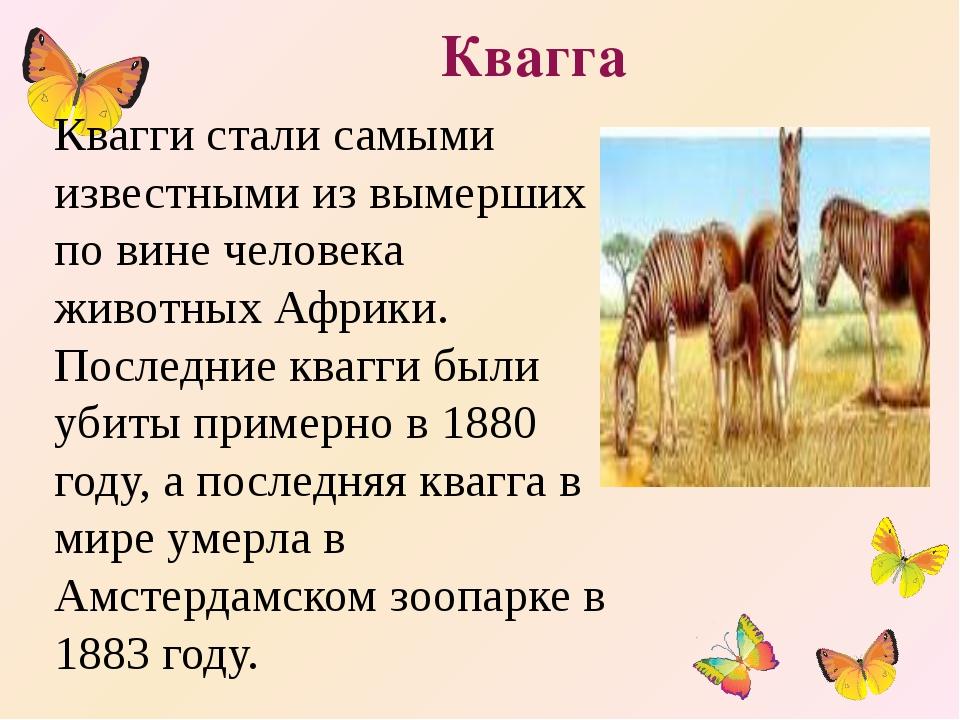 Квагга Квагги стали самыми известными из вымерших по вине человека животных А...