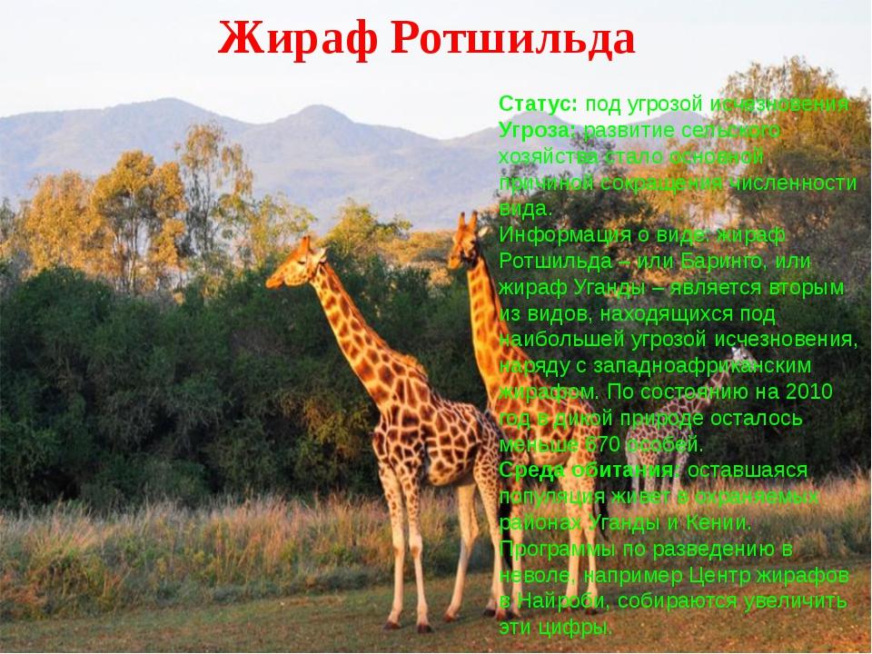 Жираф Ротшильда Статус: под угрозой исчезновения Угроза: развитие сельского...