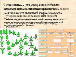 Систематика (от греч. systematikos — упорядоченный, относящийся к системе), о