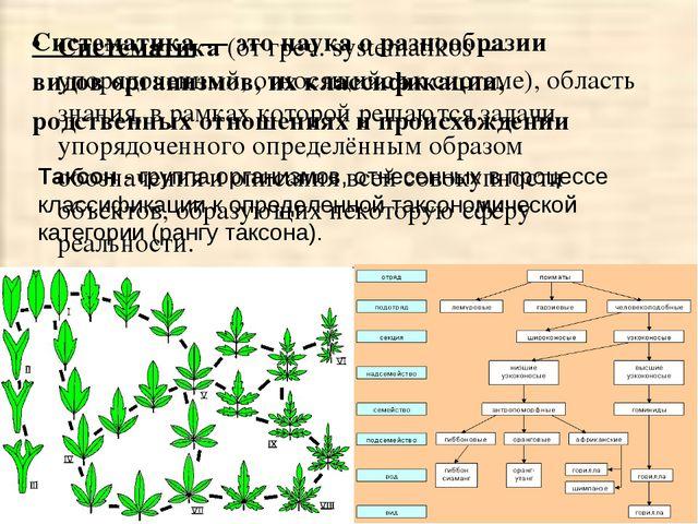 Систематика (от греч. systematikos — упорядоченный, относящийся к системе), о...