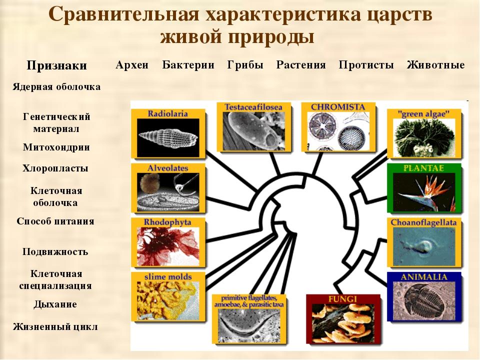 Сравнительная характеристика царств живой природы ПризнакиАрхеиБактерииГри...