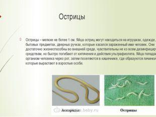 Острицы Острицы – мелкие не более 1 см. Яйца остриц могут находиться на игру