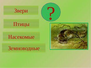 Звери 4 ноги, шерсть Птицы 2 ноги, 2 крыла, перья Насекомые 6 ног Земноводные