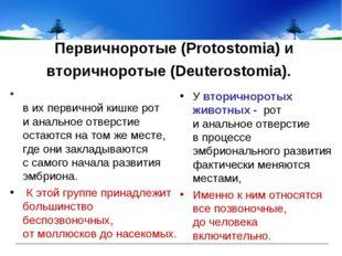 Первичноротые (Protostomia) и вторичноротые (Deuterostomia). У вторичноротых