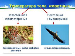 Температура тела животных Непостоянная Постоянная Пойкилотермные Гомеотермны