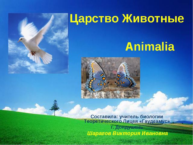 Царство Животные Animalia Составила: учитель биологии Теоретического Лицея «Г...