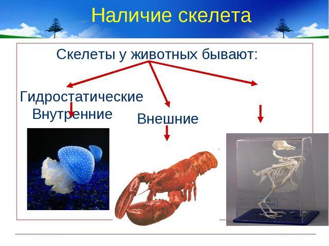 Наличие скелета Скелеты у животных бывают: Гидростатические Внутренние Внешние
