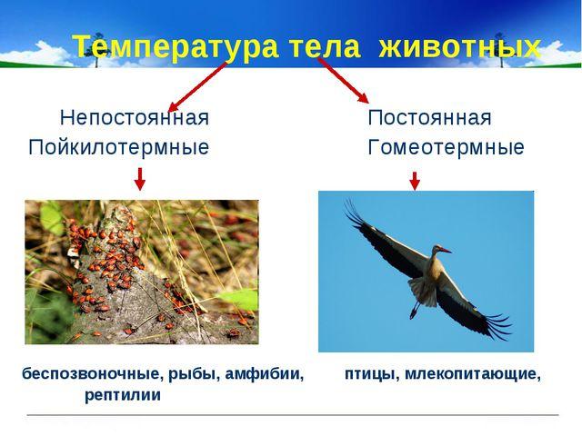 Температура тела животных Непостоянная Постоянная Пойкилотермные Гомеотермны...