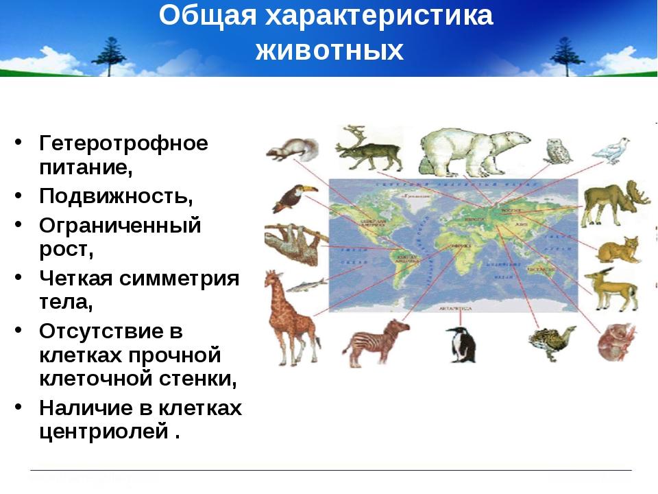 Общая характеристика животных Гетеротрофное питание, Подвижность, Ограниченны...