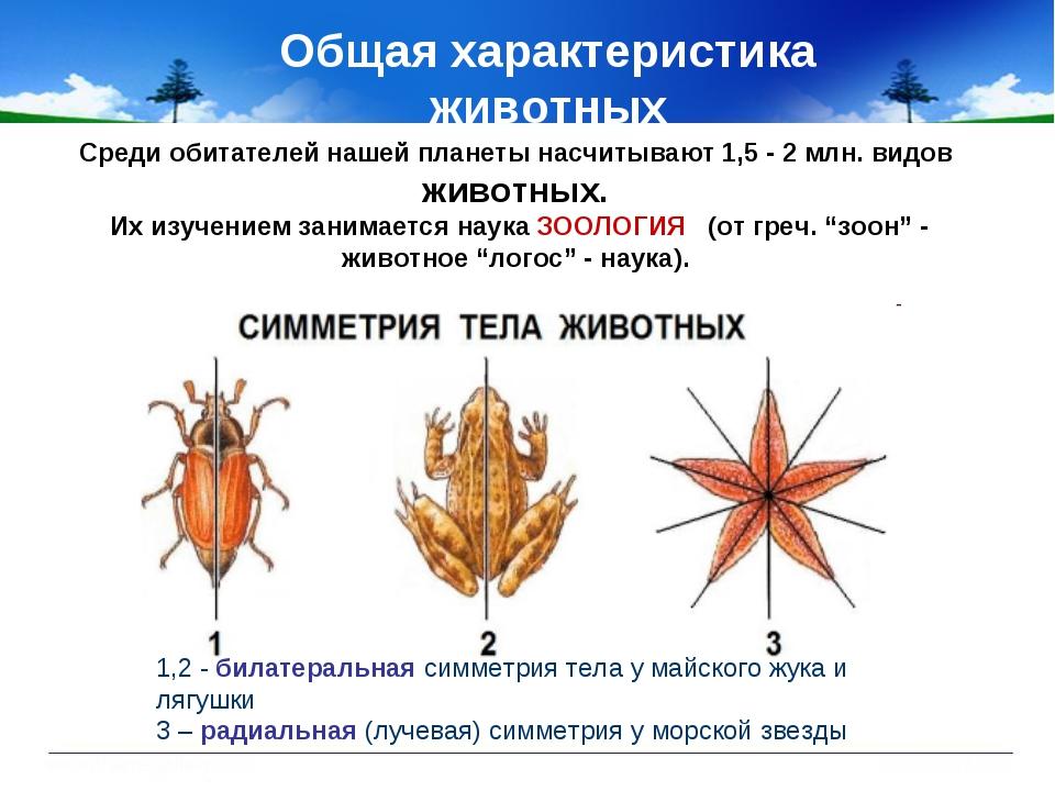 Общая характеристика животных 1,2 - билатеральная симметрия тела у майского ж...