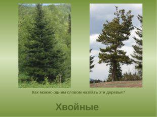 Как можно одним словом назвать эти деревья? Хвойные