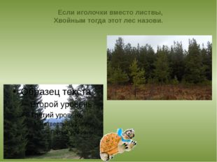 Если иголочки вместо листвы, Хвойным тогда этот лес назови.