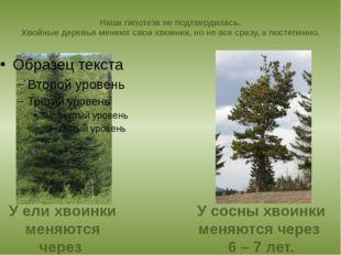 Наша гипотеза не подтвердилась. Хвойные деревья меняют свои хвоинки, но не вс
