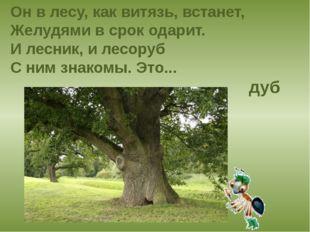 Он в лесу, как витязь, встанет, Желудями в срок одарит. И лесник, и лесоруб С