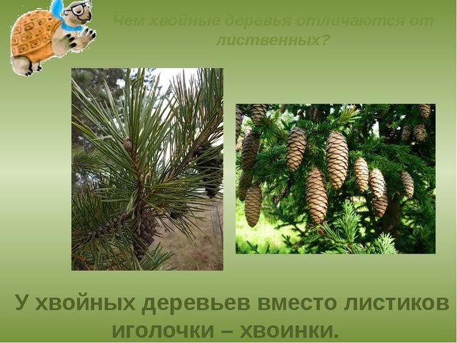 Чем хвойные деревья отличаются от лиственных? У хвойных деревьев вместо листи...