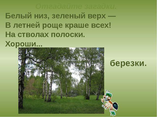 Отгадайте загадки. Белый низ, зеленый верх — В летней роще краше всех! На ств...