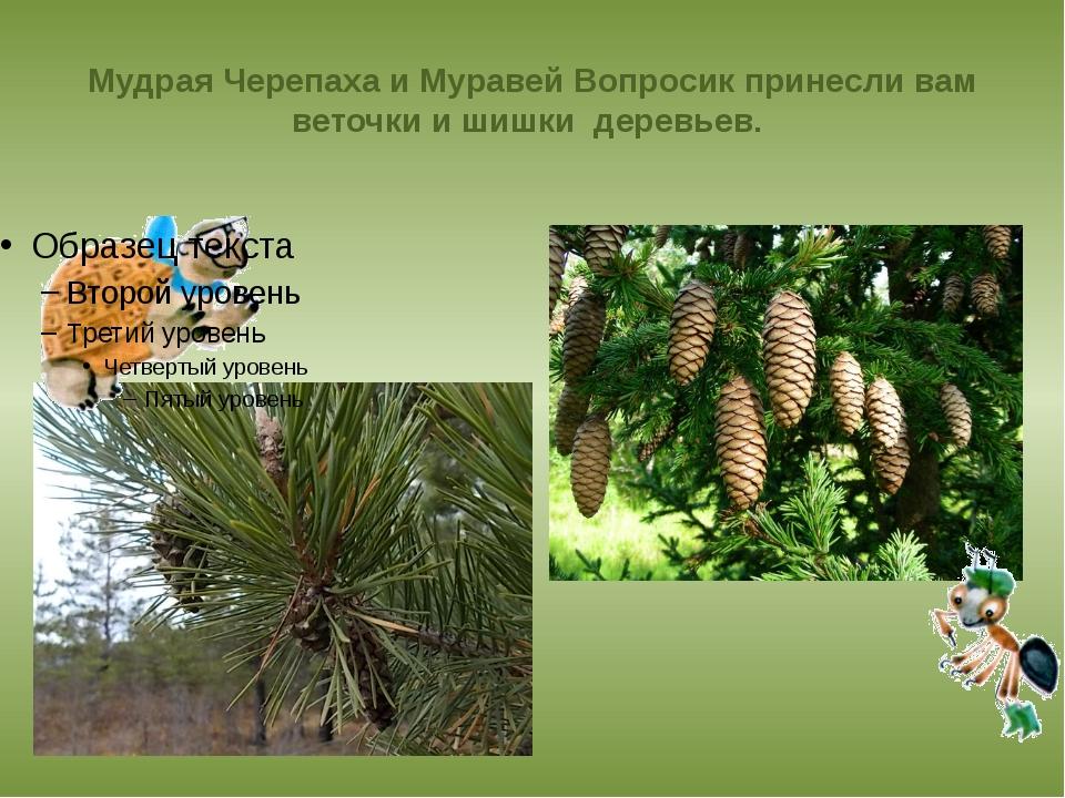 Мудрая Черепаха и Муравей Вопросик принесли вам веточки и шишки деревьев.