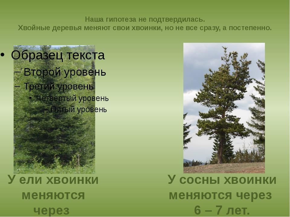 Наша гипотеза не подтвердилась. Хвойные деревья меняют свои хвоинки, но не вс...