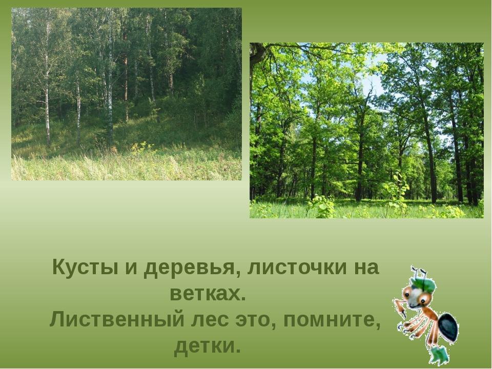 Кусты и деревья, листочки на ветках. Лиственный лес это, помните, детки.