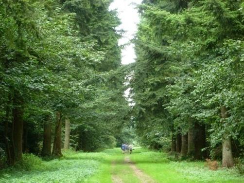 big-wood-thetford-forest-219769
