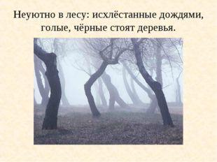 Неуютно в лесу: исхлёстанные дождями, голые, чёрные стоят деревья.