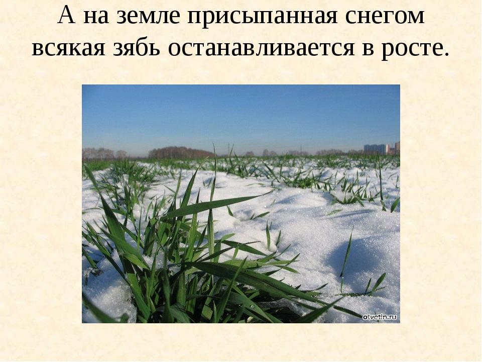 А на земле присыпанная снегом всякая зябь останавливается в росте.
