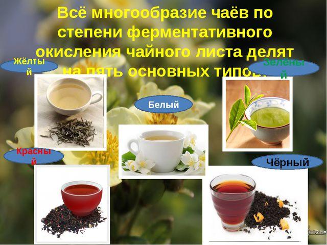 Всё многообразие чаёв по степени ферментативного окисления чайного листа деля...
