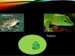 Жаба Ящерица