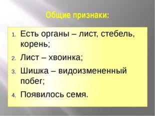 Общие признаки: Есть органы – лист, стебель, корень; Лист – хвоинка; Шишка –
