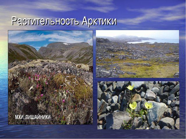Растительность Арктики
