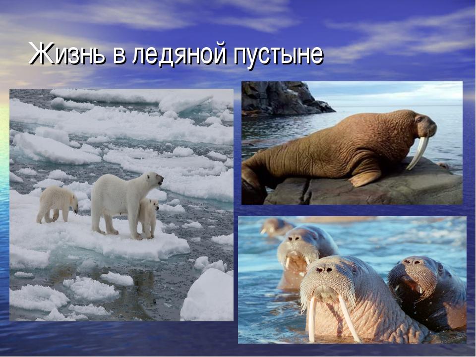 Жизнь в ледяной пустыне