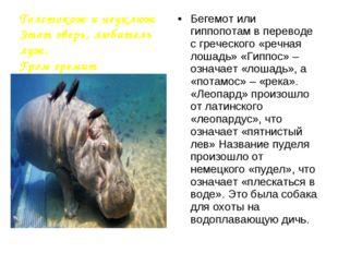 Бегемот или гиппопотам в переводе с греческого «речная лошадь» «Гиппос» – озн