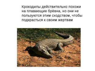 Крокодилы действительно похожи на плавающие брёвна, но они не пользуются этим