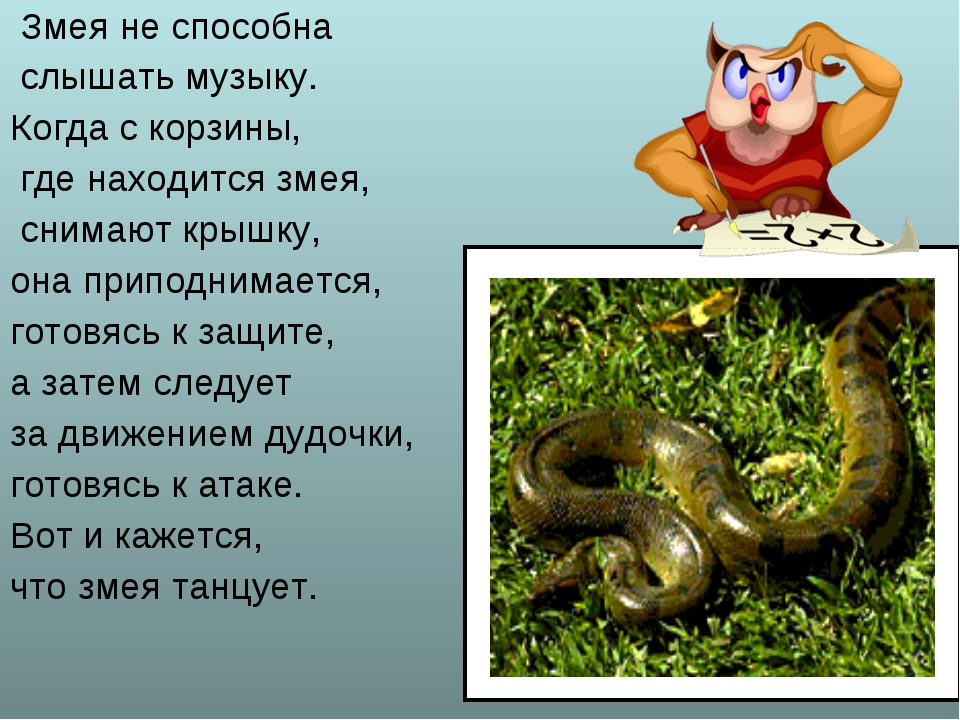 Змея не способна слышать музыку. Когда с корзины, где находится змея, снимаю...