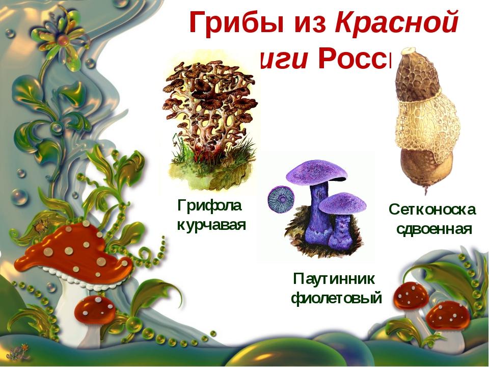 дьявольский грибы из красной книги картинки свинины