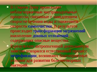 В Старом Дону происходят неблагоприятные внутриводоёмные процессы, связанные