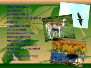 Мир животных поражает удивительным разнообразием форм и красок, совершенство