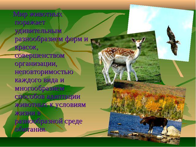 Мир животных поражает удивительным разнообразием форм и красок, совершенство...