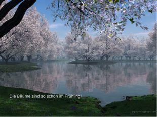 Die Bäume sind so schön im Frühling!