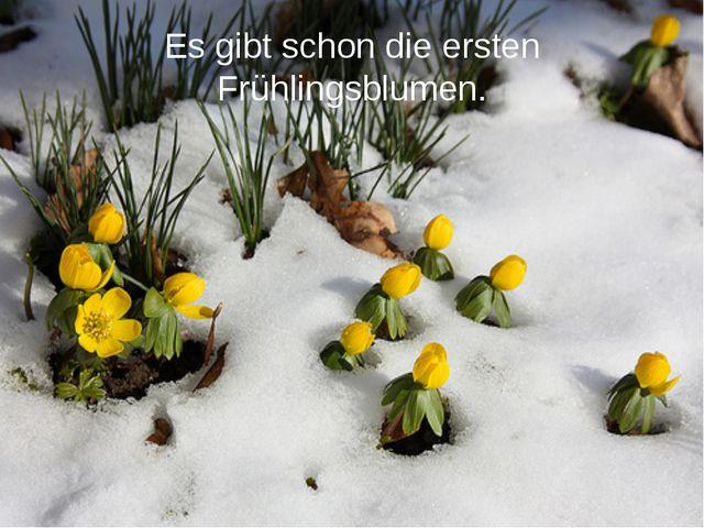 Es gibt schon die ersten Frühlingsblumen.