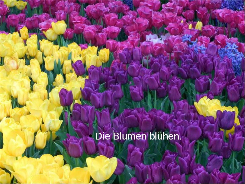 Die Blumen blühen.